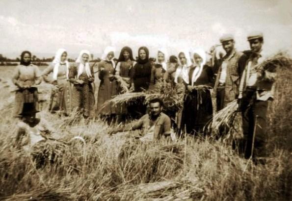 Αποτέλεσμα εικόνας για θερισμός στο χωράφι παλια φωτο