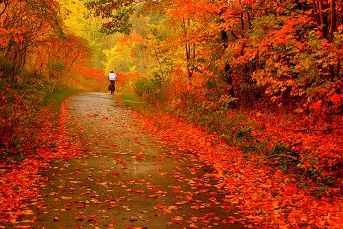 Αποτέλεσμα εικόνας για εικονες φθινοπωρου