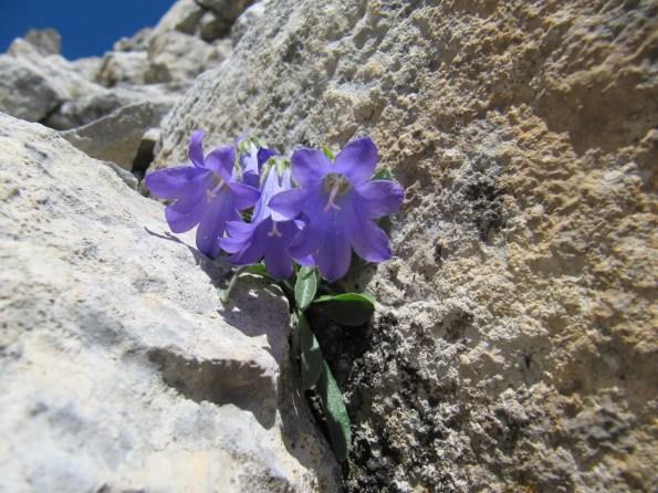 Αποτέλεσμα εικόνας για λουλουδι στο βραχο